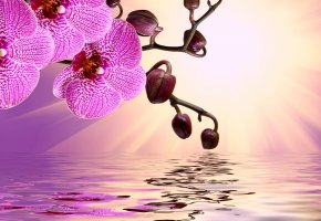 orchid, pink, water, reflection, flowers, sunshine, beautiful, орхидея, цветы