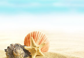 Обои shells, seashells, sand, beach, summer