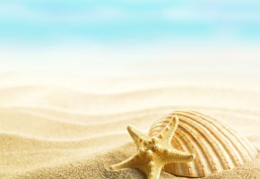 Обои summer, seashells, shells, sand, beach